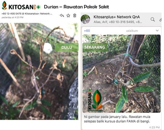 durian b4&after.jpg