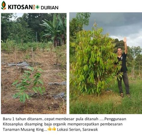 durian jackson 1 thn.jpg