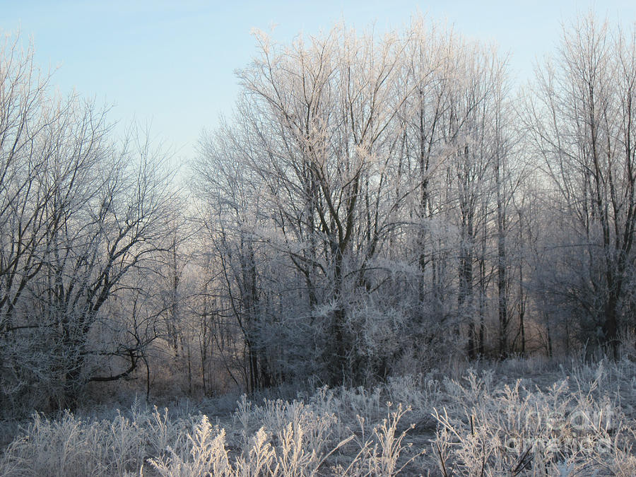 frosty-woods-on-a-cold-morning-the-elderberry-blossom-art-by-conni-schaftenaar.j
