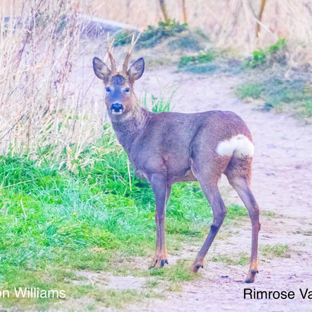Sunny spells & scattered showers in Sefton. Beautiful photo today of a deer in Rimrose Valley Park