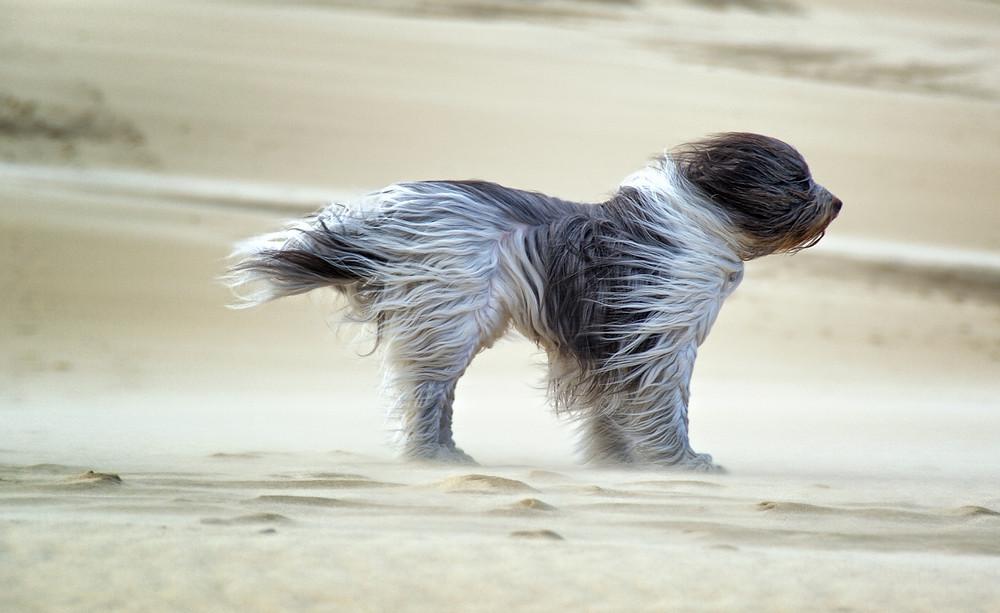 sands-wind-friend-photo-wait-dog-animal-hd-wallpaper.jpg