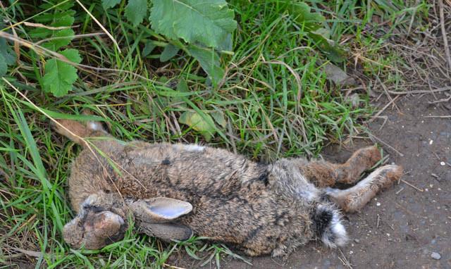 dead-rabbit_southport_02.jpg