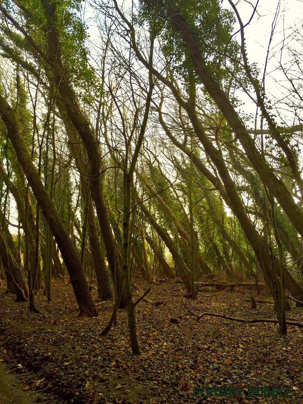 Trees bent2.jpg