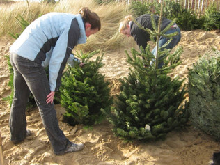 National Trust in Formby thank everyone for their Christmas trees