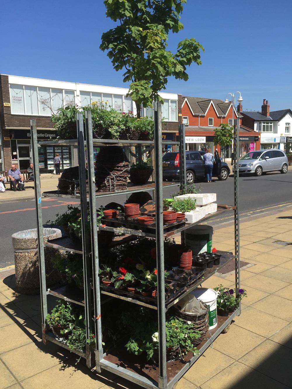 Beautiful new Flowers in Formby Village 3.JPG