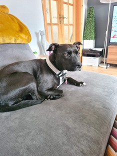 UPDATE - REUNITED - Dog is lost in Formby about 4pm today