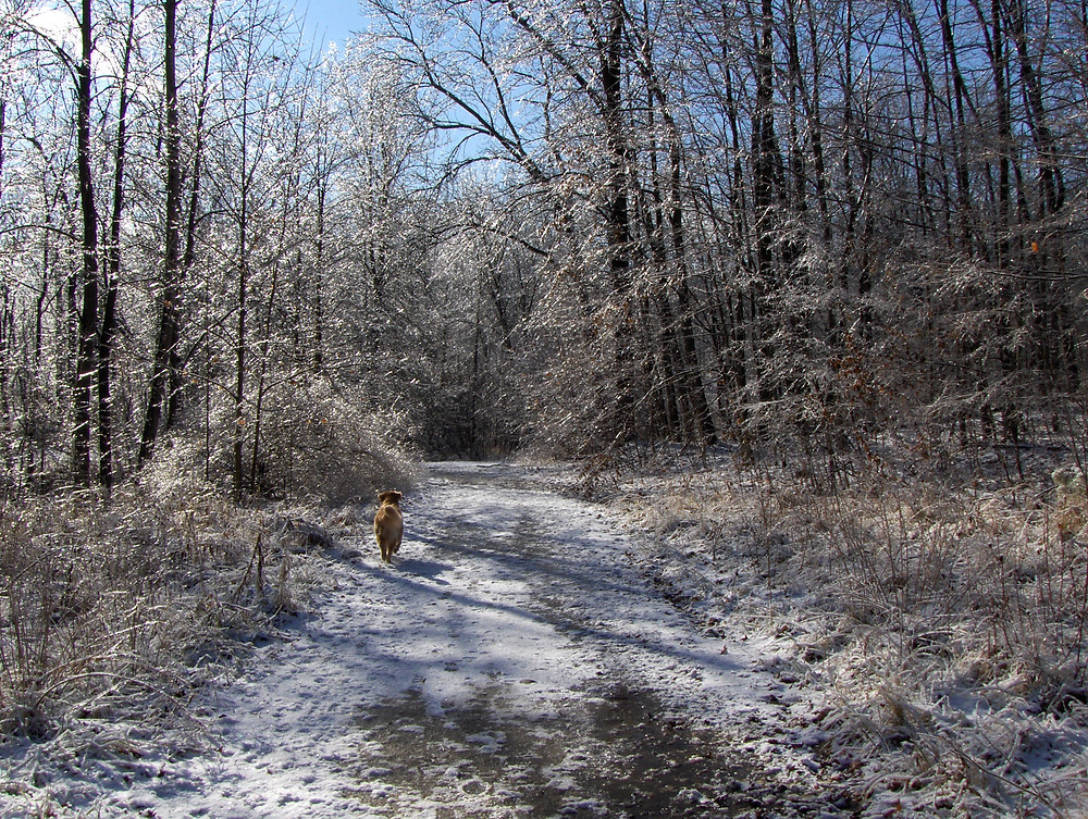 nutmeg-in-frosty-woods.jpg