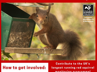 Can you help Merseyside & Lancashire Red Squirrel Project with their Red Squirrel Garden Survey?