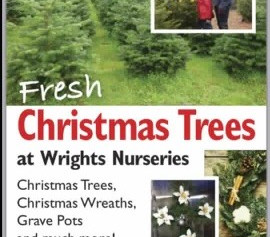 Fresh Christmas Trees at Wrights Nurseries by Tesco with £5 off if you mention Formby Bubble