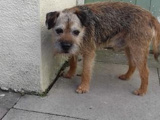 Dog found by Bay Horse pub in Formby