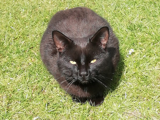 Does anyone recognise this beautiful black cat?