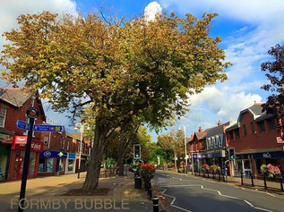 Tree Hugging Protest in Formby Village tomorrow at 9am to stop the trees being destroyed