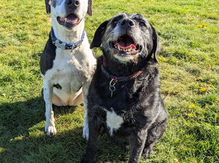 The Tail of Alice and Daisy who are best friends looking for their forever home together