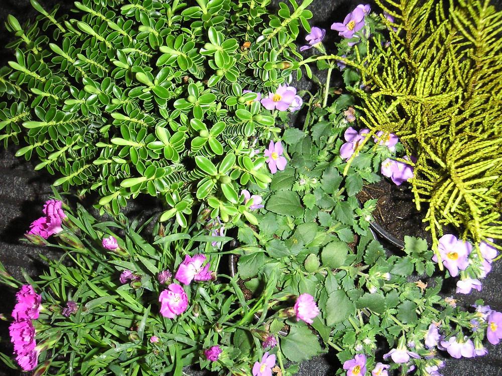 Formby Flower Club.jpg