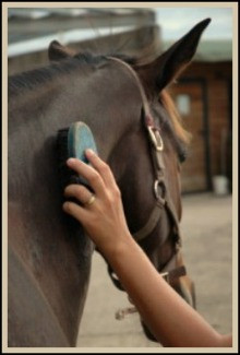 groomingahorse.jpg