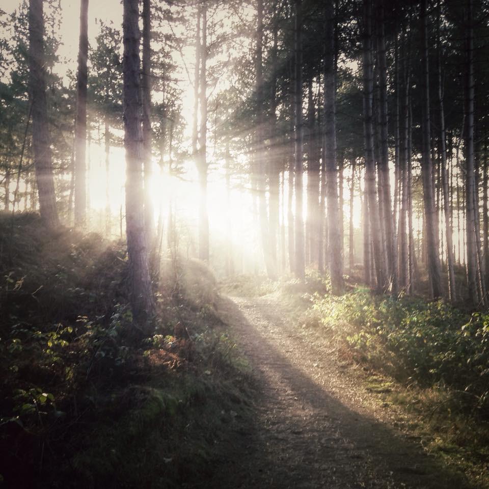 Jason Griffiths sun through pinewoods.jpg