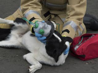 Merseyside Fire & Rescue Service celebrate more pet oxygen masks arriving at Sefton stations