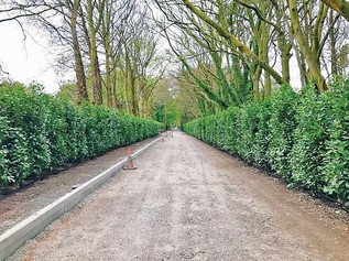 Over a thousand trees planted to improve St Luke's Church Road, so why are residents angry?