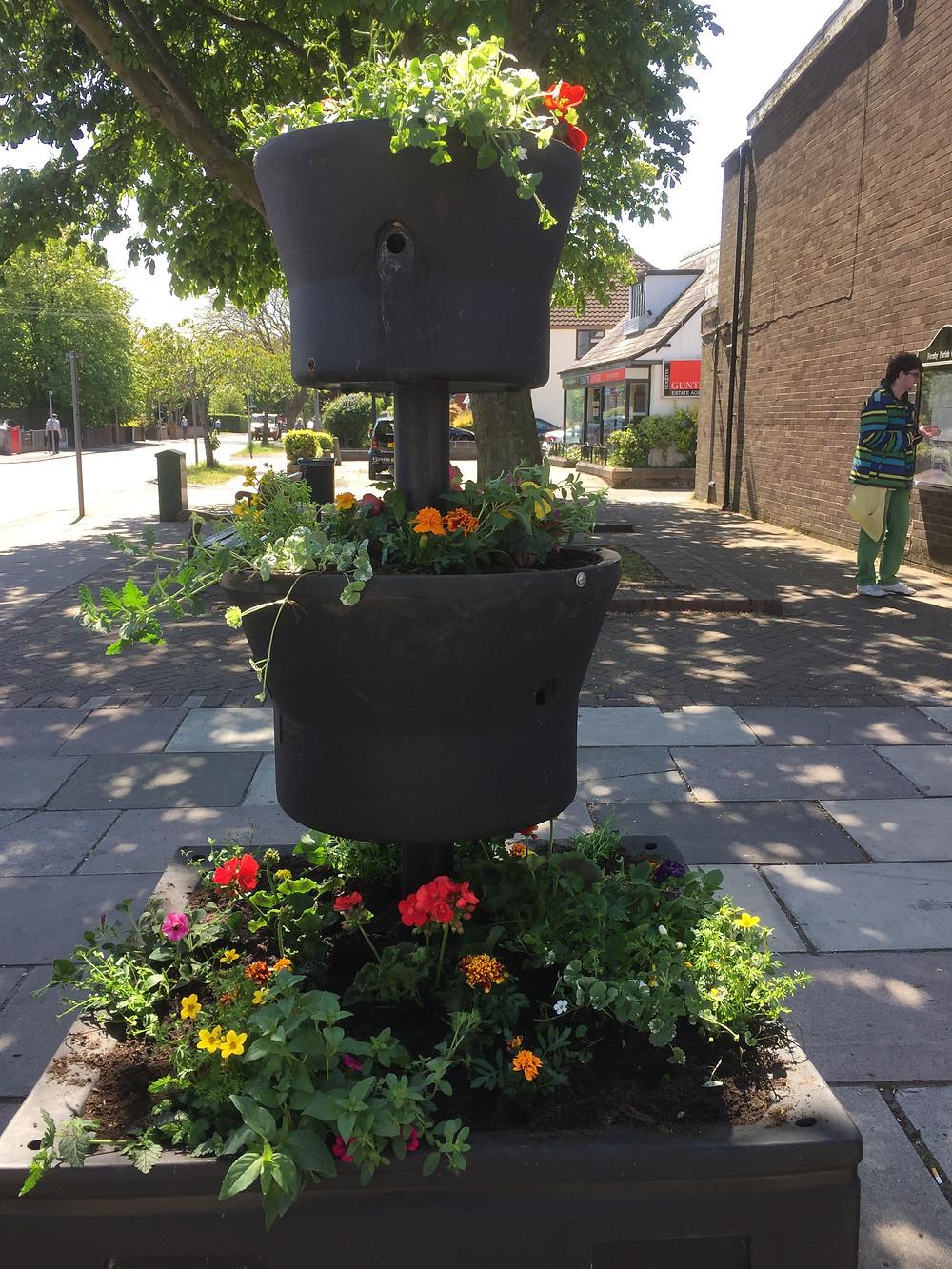 Beautiful new Flowers in Formby Village10.JPG