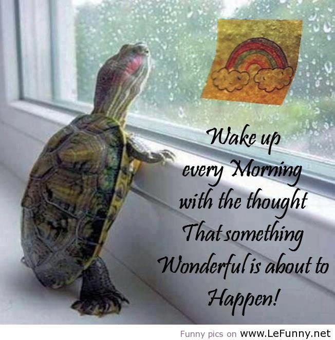 How-I-wake-up-every-morning.jpg