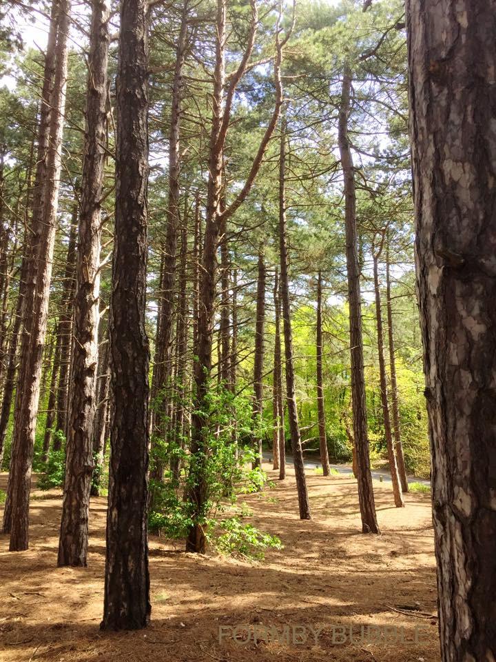 Formby Pinewoods.....jpg