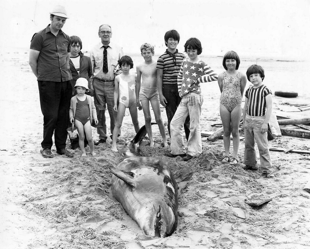 A dead dolphin on Formby Beach, undated.jpg