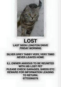 Lost cat in Formby
