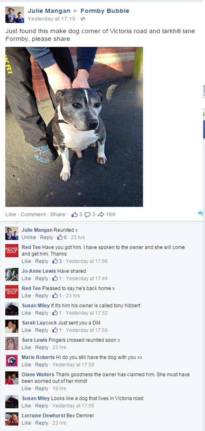 Dog found 2.jpg