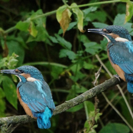 Are the birds singing louder since the Coronavirus? Well, yes maybe...