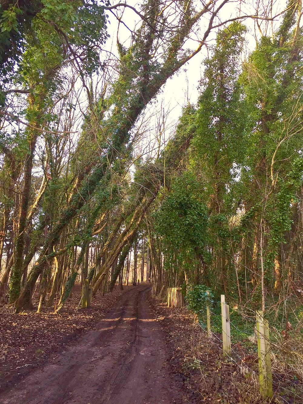 Bent trees3.jpg
