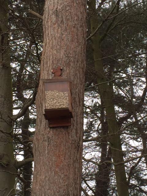 Squirrel Box.JPG
