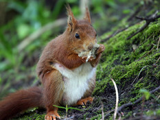 Red Squirrel Cycle Tour....25th October - 10:30am to 01:00pm
