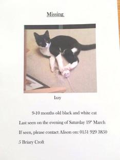 Missing cat in Hightown