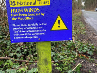 Formby Squirrel Reserve will be closed due to high winds on Thursday