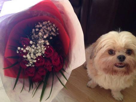 Valentine roses off Costa