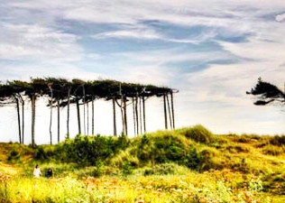 Due to the high winds brought in by Storm Hannah the National Trust Formby Victoria Road will remain