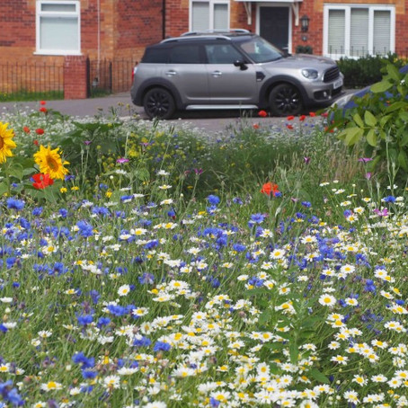 New wildflower meadows to be created in south Sefton by community gardeners