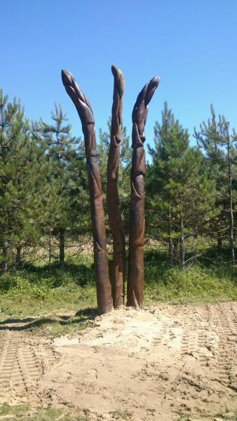 asparagus spears3.jpg