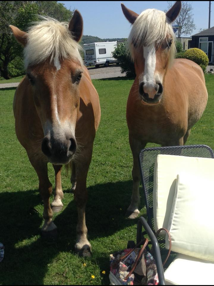 Good Home needed for two ponies.jpg