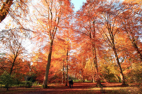 Westonbirt Arboretum, Gloucestershire.jpg