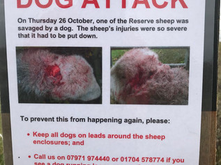 Natural England ask for help after a dog attacked one of their sheep