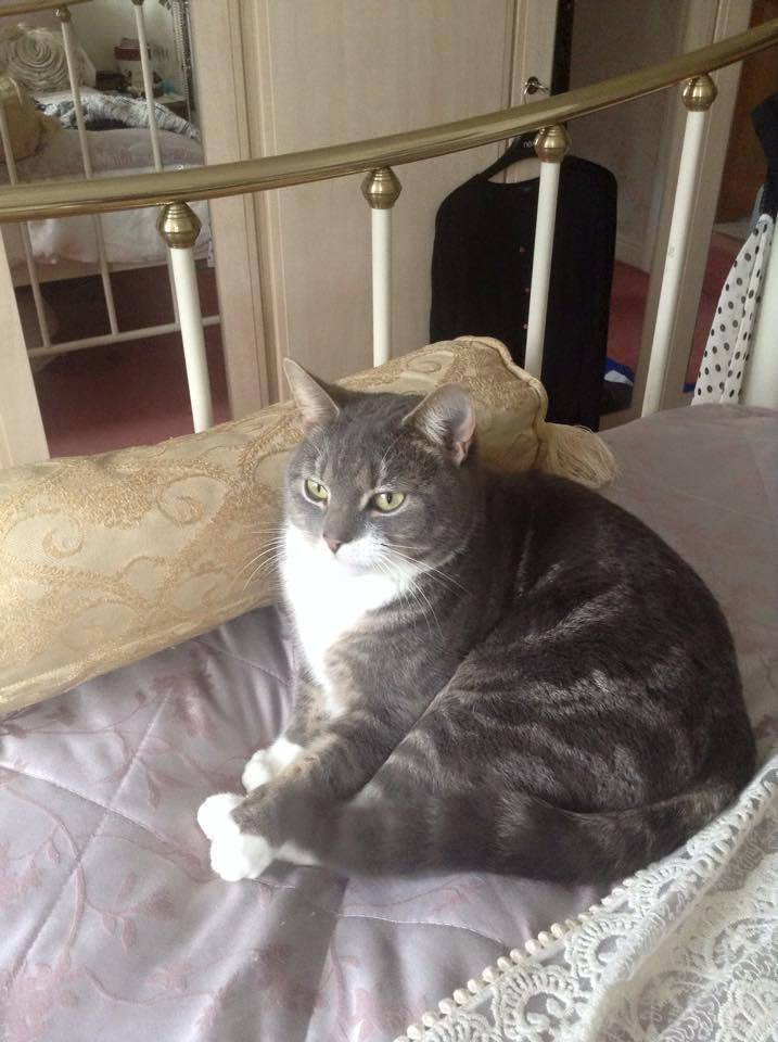 Poppy the cat missing from Formby.jpg