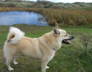 Finn the dog is lost between Formby and Ainsdale