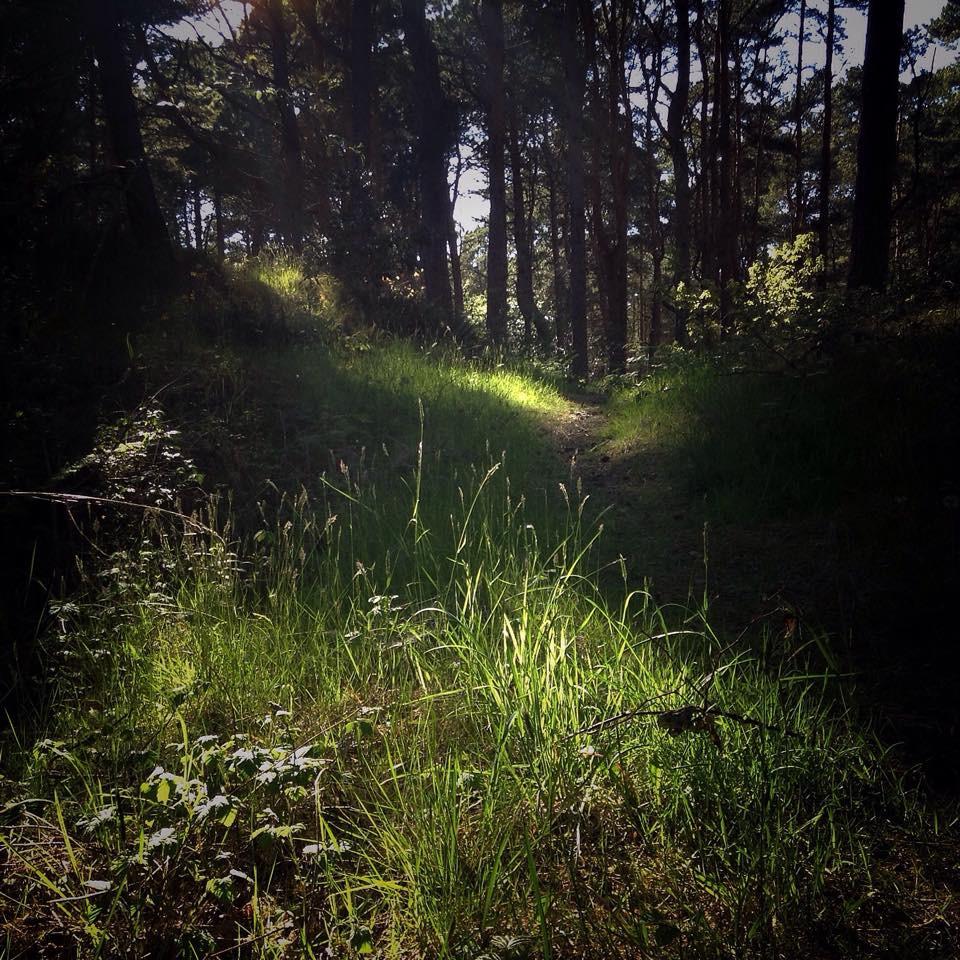 Jason Griffiths - Formby Woods.jpg