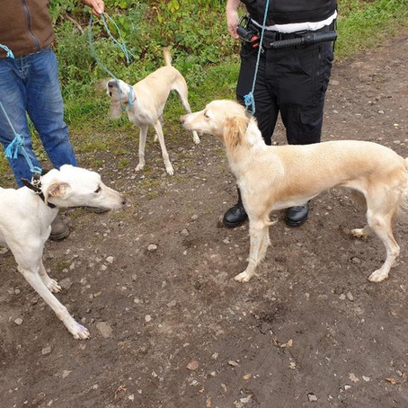 Hunting wild mammals with dogs is illegal as two men in Ince Blundell found out