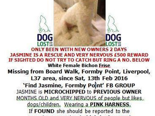 Missing Dog at Formby point since Saturday 13th February - Organised search TODAY