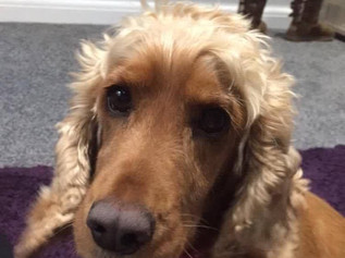 Daisy the dog missing on Formby beach today