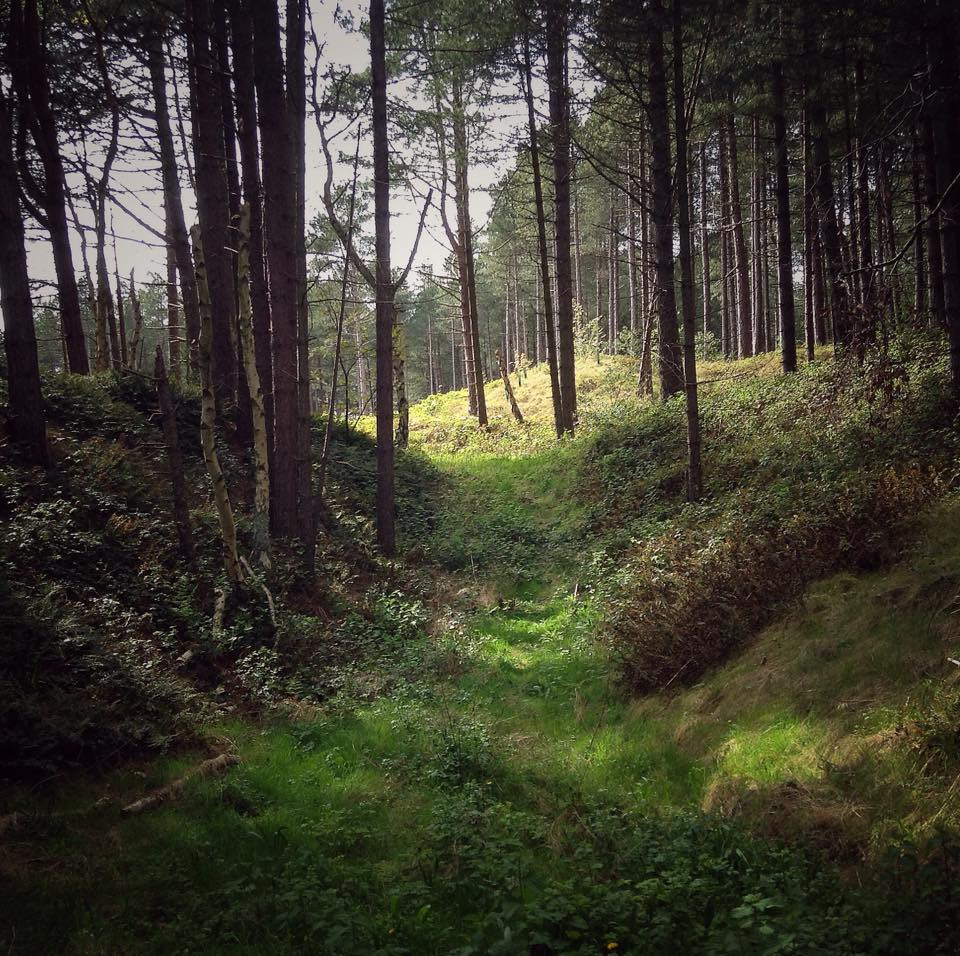 The Pinwoods - Formby - Jason Griffiths.jpg