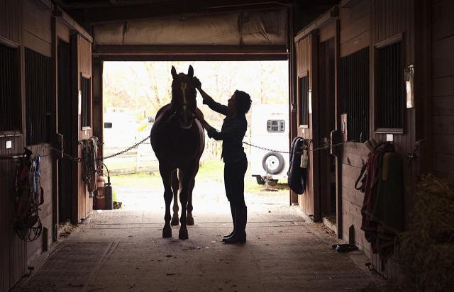 horse-grooming-resized.jpg