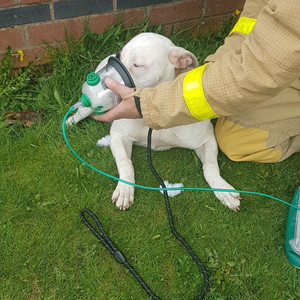 Merseyside Fire rescue a young puppy from a property in Maghull
